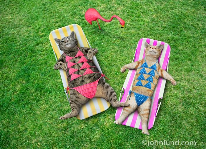 Funny-Bikini-Cats